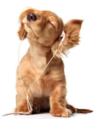 кученце слуша музика